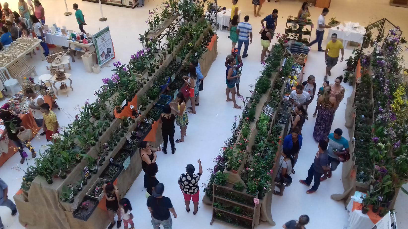exposição orquídeas em Marabá