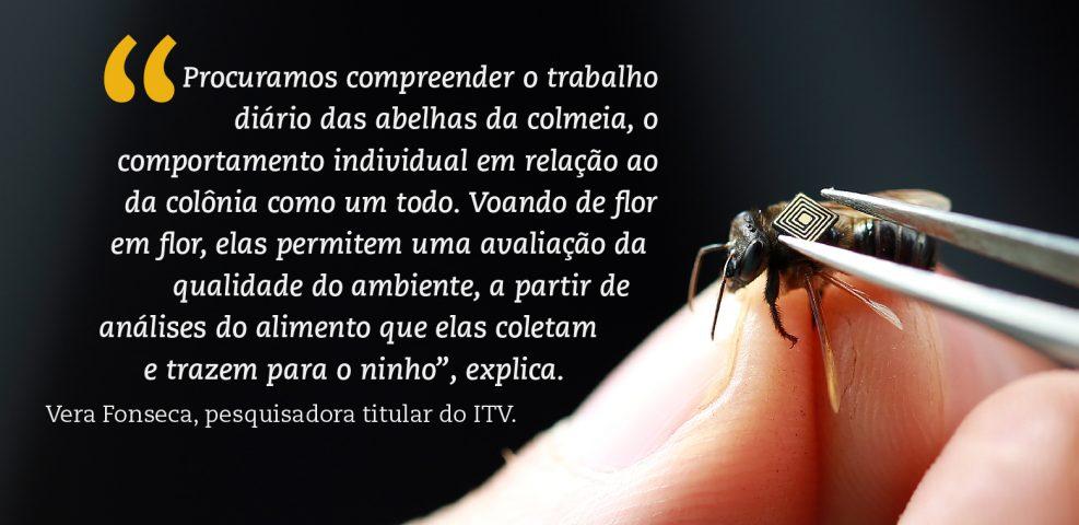 PubliEditorial_Abelhas_olho_2